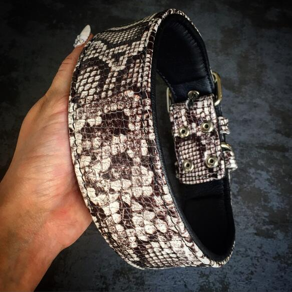 Rock Python collar dog breds