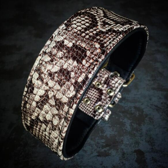 Rock Python collar small medium large dog breeds