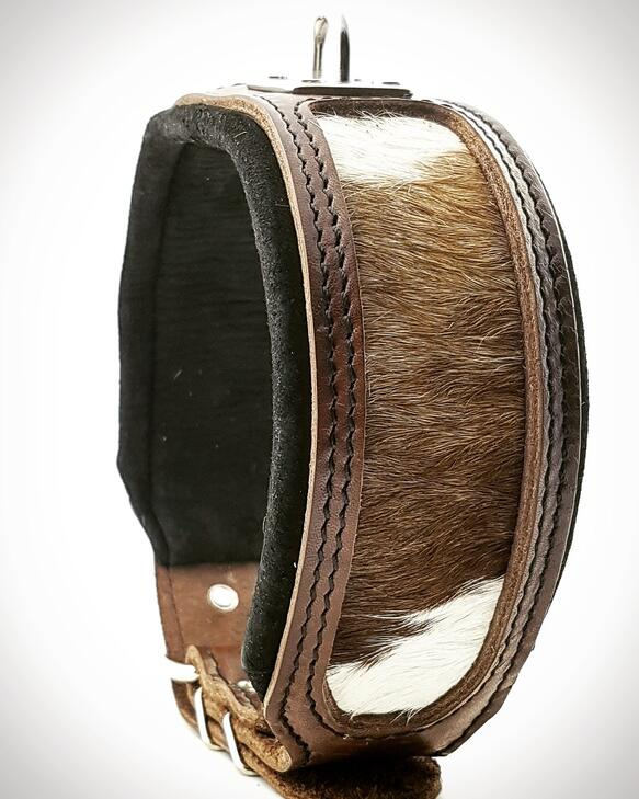 The buffalo dog collar